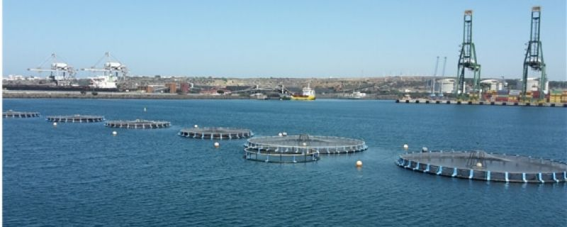 Sines aquaculture operation starts using Aquasafe forecasting service
