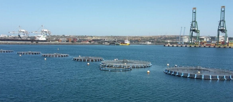 Sines aquaculture operation starts using Aquasafe forecasting service