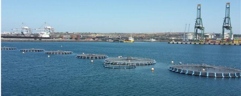 Exploração aquícola em Sines passa a utilizar o serviço de previsões Aquasafe